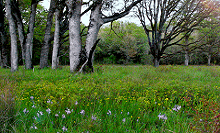 West Eugene Wetlands, BLM, Flickr, CC 2.0